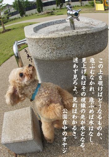 DSC03975_2.jpg