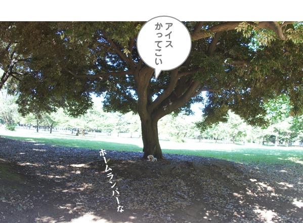 DSC08927.jpg