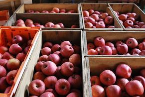 りんご箱DSC_0029