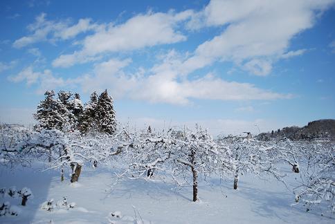 雪のりんご園DSC_0077