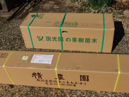 2011.4.2 みかん苗到着 001