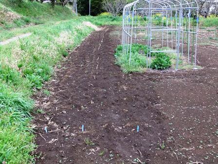 2011.4.17サトイモ植え 017