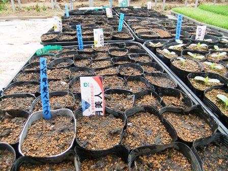 2011.4.19野菜の種まき 007