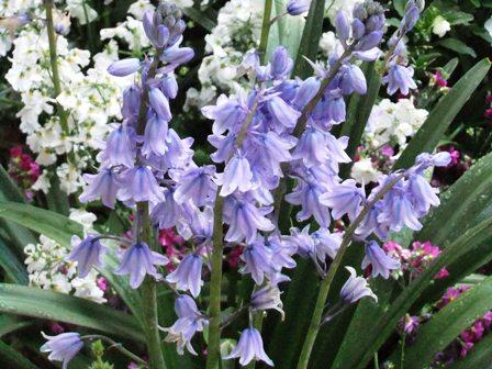 2011.4.24 庭の花々 035