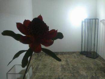 のむら家Flower Work(2009.9.21)
