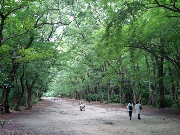 広・高瀬川下鴨アジサイ2011 038