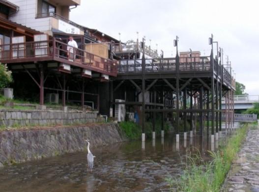 高瀬川下鴨アジサイ2011 037
