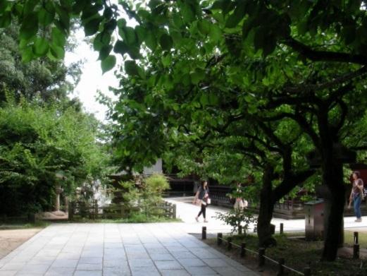 北野桂川2011-6月 052