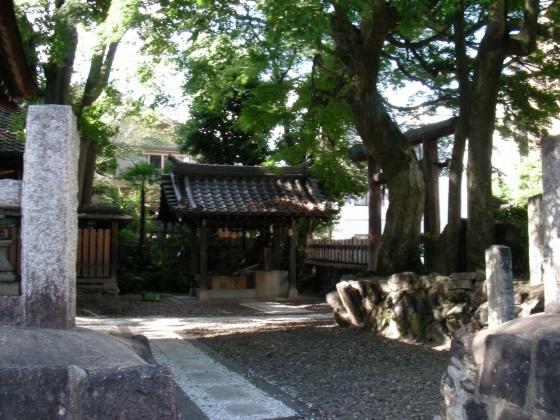 北野桂川2011-6月 271