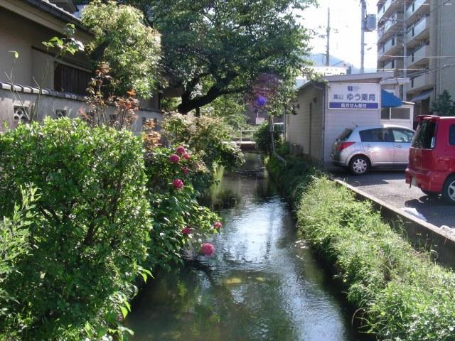 北野桂川2011-6月 280