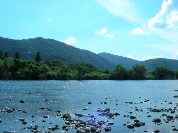 北野桂川2011-6月 245
