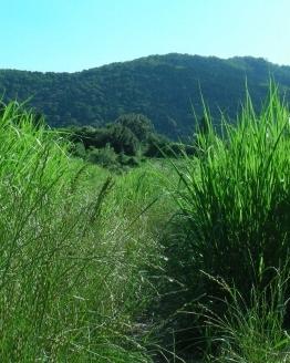北野桂川2011-6月 256
