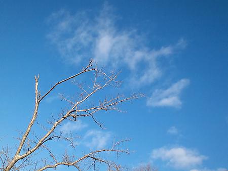 宇賀神社様からの空
