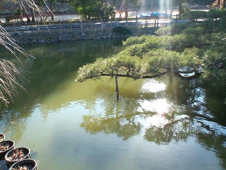 宇賀神社様 神池