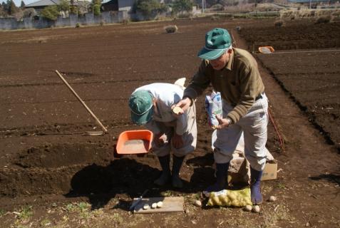 2012-03-12 23年度年少、年中じゃがいも種イモ植え 025 (800x536)