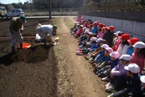 2012-03-12 23年度年少、年中じゃがいも種イモ植え 031 (800x536)