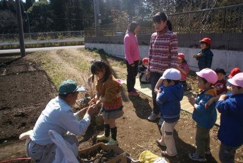 2012-03-12 23年度年少、年中じゃがいも種イモ植え 041 (800x536)