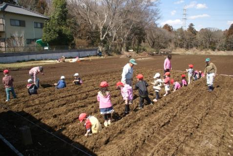 2012-03-12 23年度年少、年中じゃがいも種イモ植え 047 (800x536)