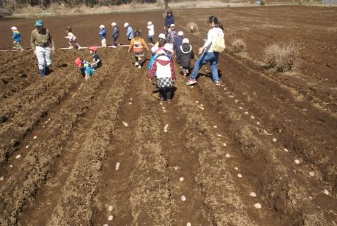 2012-03-12 23年度年少、年中じゃがいも種イモ植え 048 (800x536)