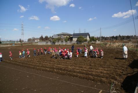 2012-03-12 23年度年少、年中じゃがいも種イモ植え 083 (800x536)