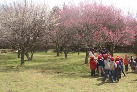 2012-03-14 2月、園外保育城址公園 036 (800x536)