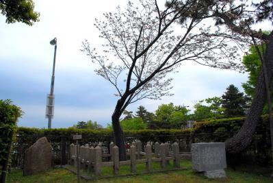 奈良八重桜 (1)