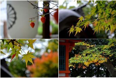枚岡神社紅葉画像1