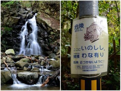 滝とイノシシ画像1