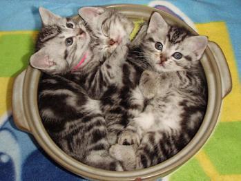 猫鍋-002