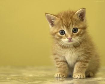 子猫-012