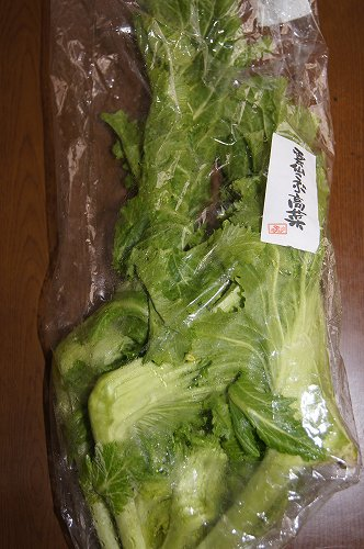 雲仙こぶ高菜1