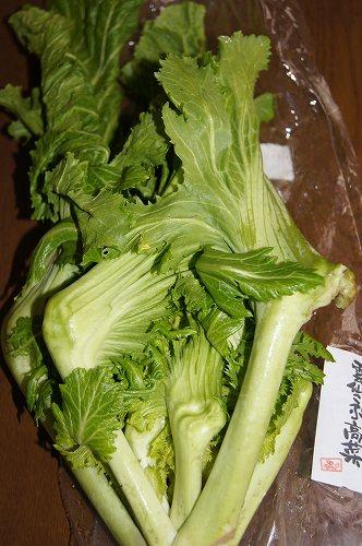 雲仙こぶ高菜2