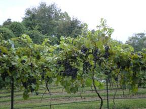 winery0909.jpg