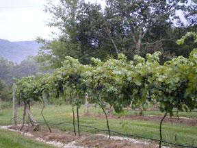 winery0909_2.jpg
