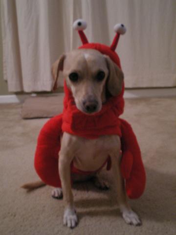 zoe_lobster.jpg