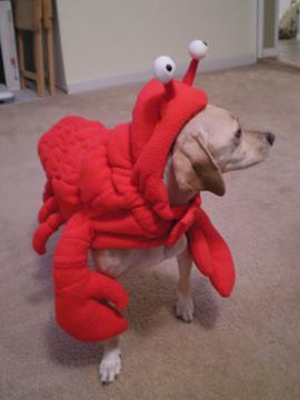 zoe_lobster10.jpg