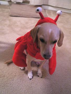 zoe_lobster4.jpg