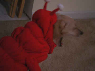 zoe_lobster5.jpg