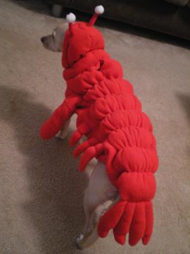 zoe_lobster6.jpg