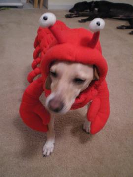 zoe_lobster8.jpg