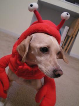 zoe_lobster9.jpg