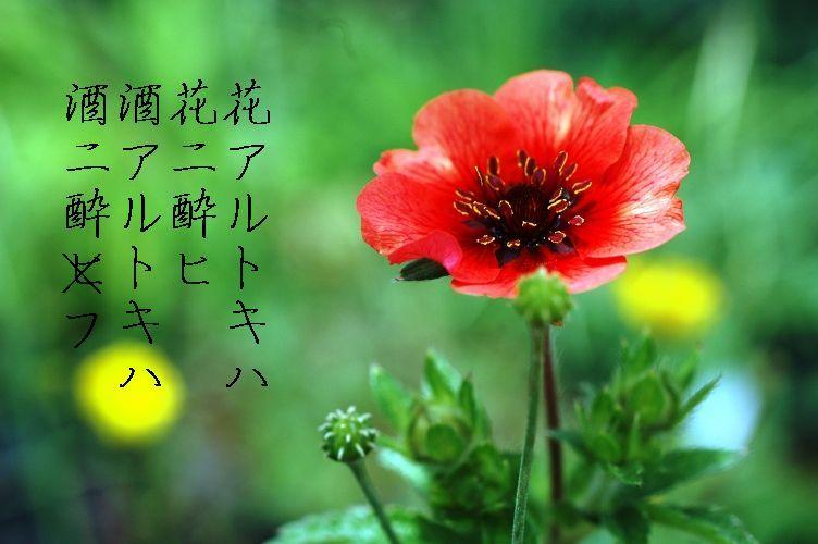 2011 鬼無戦 008