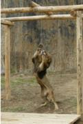 佐世保市の亜熱帯動植物園で