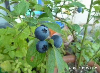 P1250813-blue.jpg