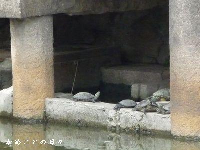 P1590611-hasinosita.jpg