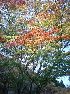 2009-10-30_11-30_0001.jpg