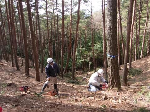 信州伐採2