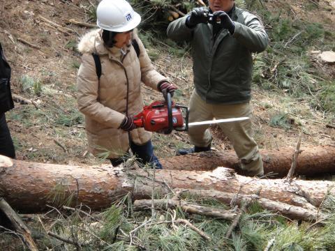 信州伐採4