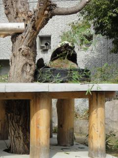 panda2_20110509220429.jpg