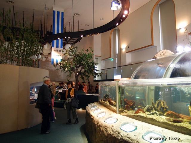 水生生物展示